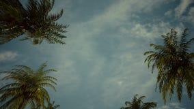 驾驶通过棕榈树胡同 库存例证