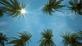 驾驶通过棕榈树胡同 向量例证