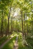 驾驶通过森林 库存照片