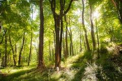 驾驶通过森林 免版税库存图片