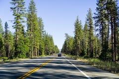 驾驶通过沙斯塔国家森林在加利福尼亚北部;常青树排队高速公路并且投下长的下午阴影 库存图片