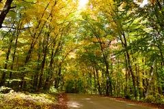 驾驶通过秋季森林 免版税库存照片