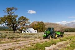 驾驶通过lavendar领域的拖拉机 免版税库存照片