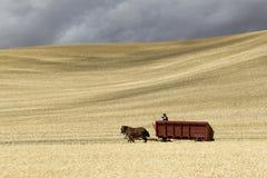驾驶马和无盖货车 库存图片
