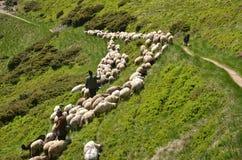 驾驶绵羊的牧羊人 免版税库存图片