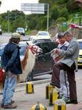 骆马乘驾 免版税库存照片