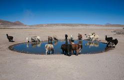 骆马低谷 免版税库存照片