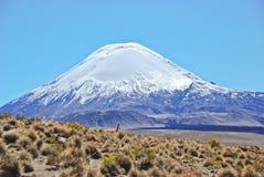 骆马类在Lauca国家公园在智利 免版税库存图片