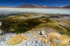 骆马 安地斯山的avaroa eduardo动物区系国家储备 流星锤 免版税库存照片