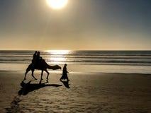 骆驼乘驾剪影在海滩的在日落在摩洛哥 免版税图库摄影