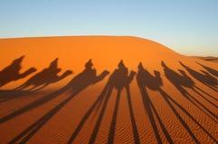 骆驼乘驾在撒哈拉大沙漠 影子 库存图片