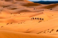 骆驼乘驾通过沙漠 库存图片