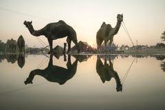 骆驼公平的普斯赫卡尔2015年 库存图片