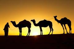 骆驼剪影。 免版税图库摄影