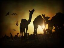骆驼剪影在普斯赫卡尔, Mela 库存图片