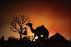 骆驼剪影在普斯赫卡尔, Mela 免版税库存照片