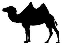 骆驼剪影 皇族释放例证