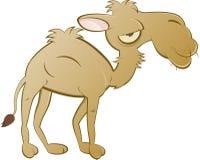骆驼动画片 免版税库存图片