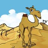 骆驼动画片 向量例证