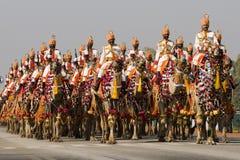骆驼印地安人游行 库存图片