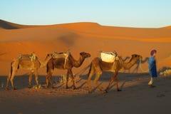 骆驼司机在非洲沙漠 库存照片
