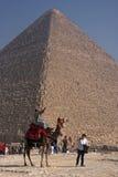 骆驼和大金字塔 免版税库存照片