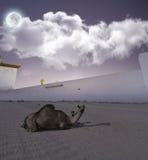 骆驼和她的儿子在沙漠在晚上 免版税库存图片