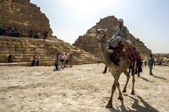 骆驼和车手移动通过女王/王后的金字塔在开罗在埃及 免版税图库摄影