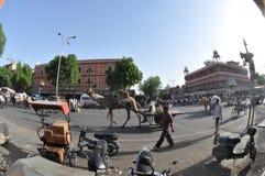 骆驼在城市 免版税库存图片