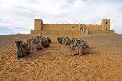 骆驼在尔格Chebbi沙漠,摩洛哥 图库摄影
