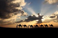 骆驼在日落背景中 库存图片
