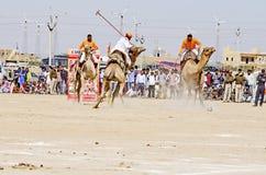 骆驼在沙漠节日期间的马球比赛在Jaisalmer,拉贾斯坦,印度,亚洲 免版税图库摄影