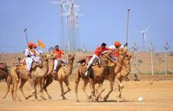 骆驼在沙漠节日期间的马球比赛, Jaisalmer,印度 库存照片