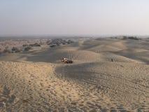 骆驼在沙漠 库存图片