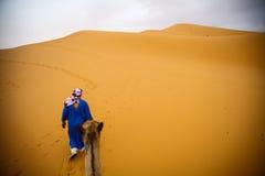 骆驼在沙漠 免版税库存图片