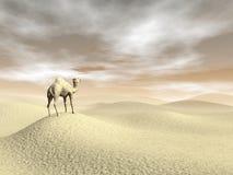 骆驼在沙漠- 3D回报 免版税库存照片