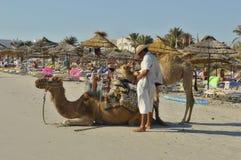 骆驼在海滩的突尼斯 免版税库存照片