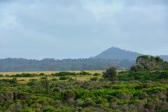 骆驼岩石, Bermagui 免版税库存照片