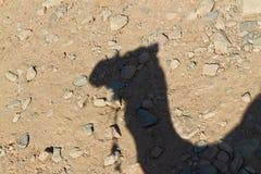 骆驼影子 免版税库存图片