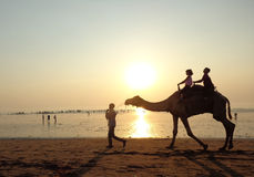 骆驼徒步旅行队和围拢在Ubhrat海滩 免版税库存图片