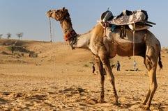 骆驼徒步旅行队 免版税库存图片
