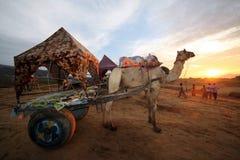骆驼推车在普斯赫卡尔, Rajastan印度 免版税图库摄影