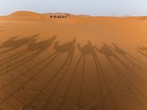 骆驼撒哈拉大沙漠影子 免版税库存照片
