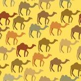 骆驼无缝的样式 沙漠动物背景  传染媒介或 向量例证