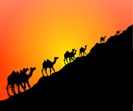 骆驼日落 免版税库存照片