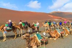 骆驼有蓬卡车与游人的 免版税库存照片