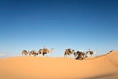 骆驼有蓬卡车在撒哈拉大沙漠的沙丘沙漠 库存图片