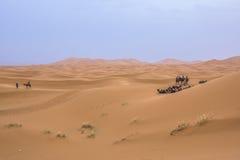 骆驼有蓬卡车在撒哈拉大沙漠 免版税库存照片