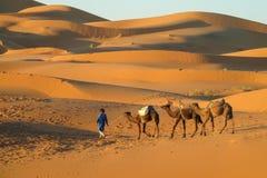 骆驼有蓬卡车在沙漠 免版税库存图片