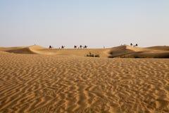 骆驼有蓬卡车天际沙丘前景蓝天 免版税库存照片